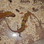 Naše mláďata baští šváby