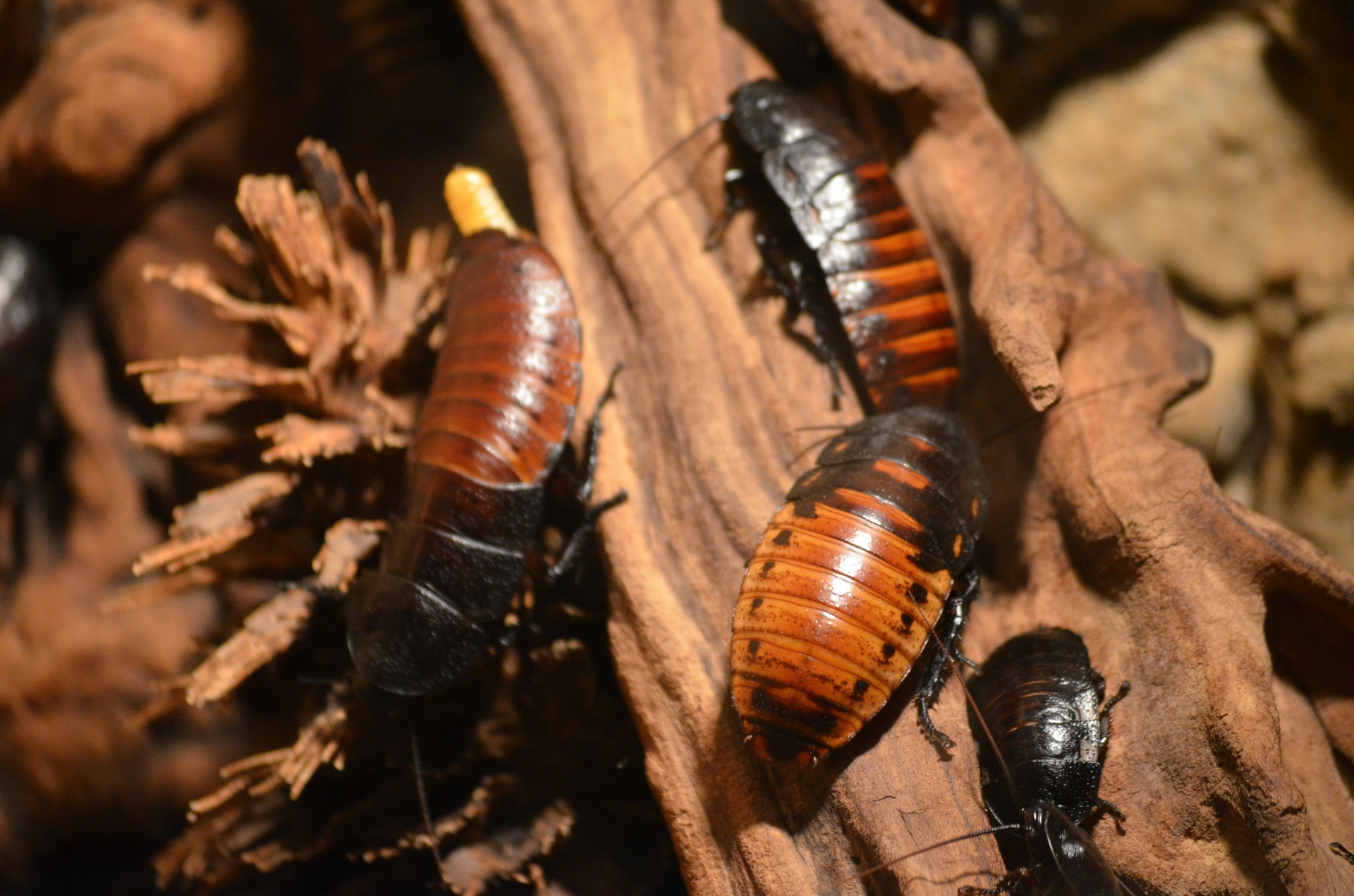 cockroaches-215544_1920